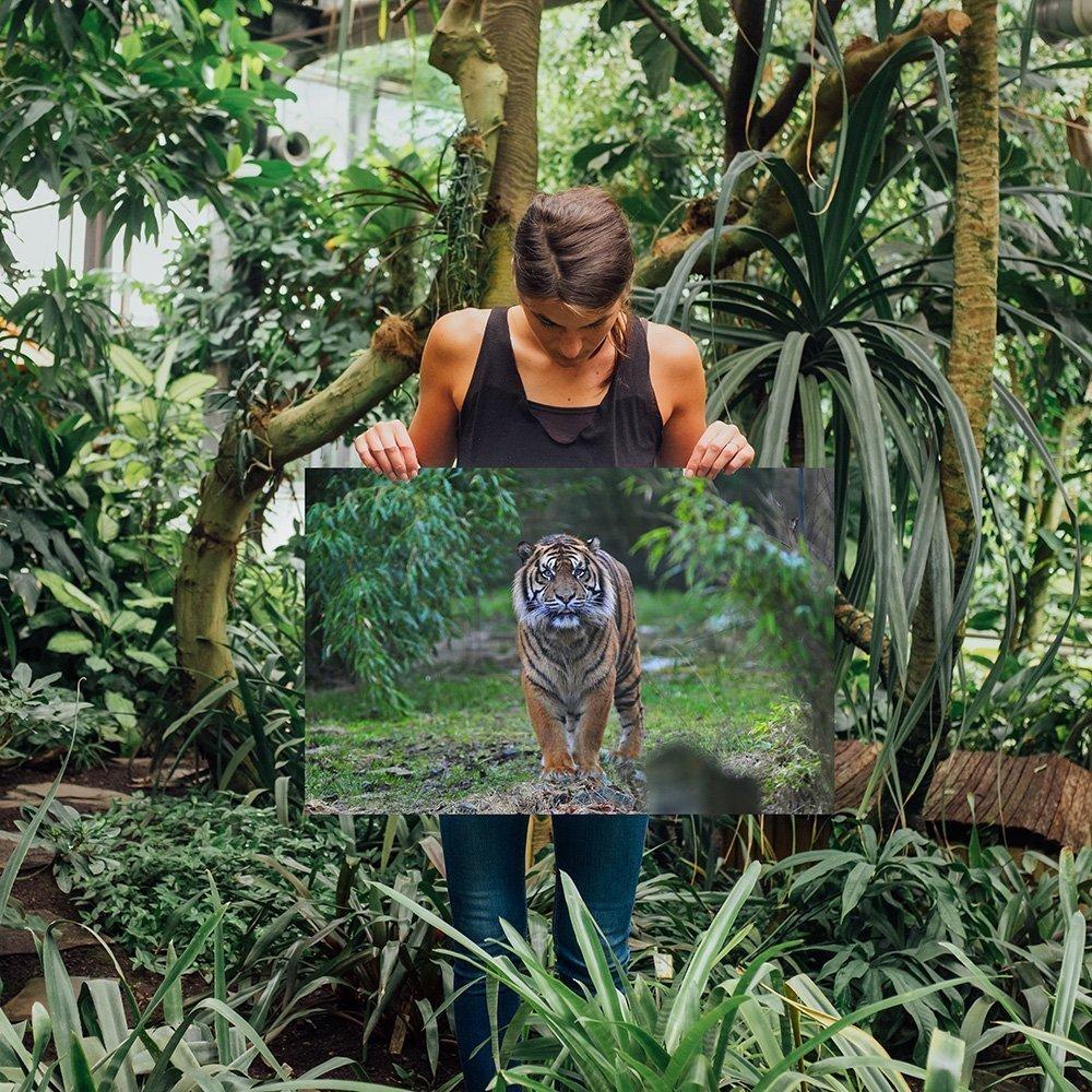 RP Nature-Desigen - dein Shop für Tier- und Naturaufnahmen