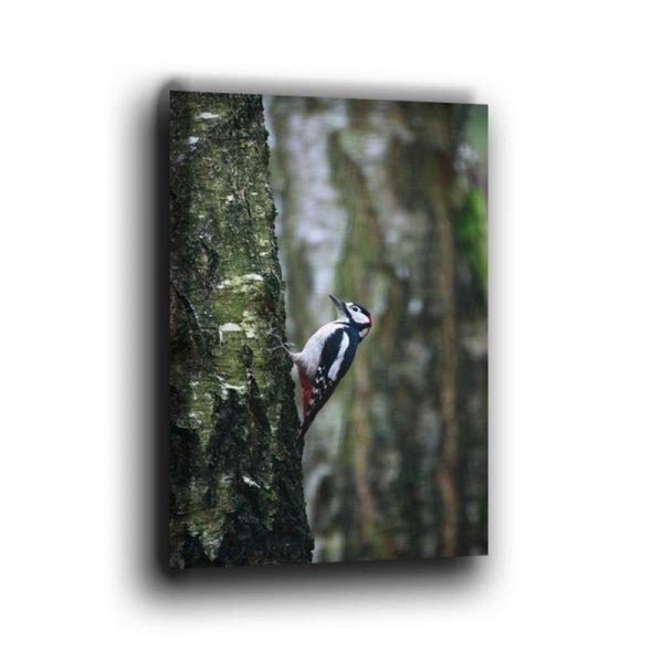 Buntspecht am Baum Hochformat Leinwand