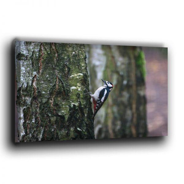 Buntspecht am Baum Leinwand