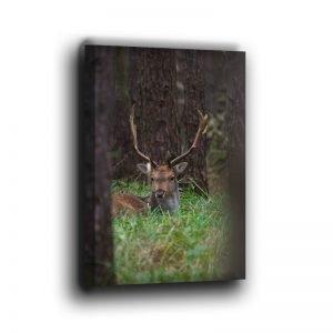 Damhirsch liegt im Wald Leinwand