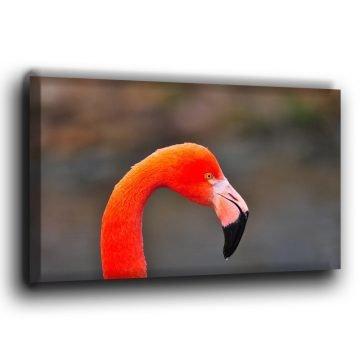 Flamingo Porträt auf Leinwand
