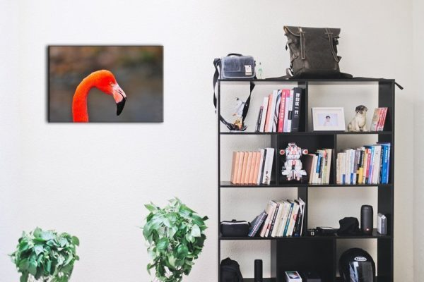 Flamingo Porträt Raumansicht