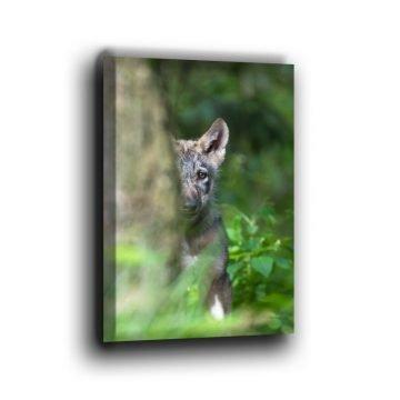 Kleiner Wolf hinter einem Baum Leinwand