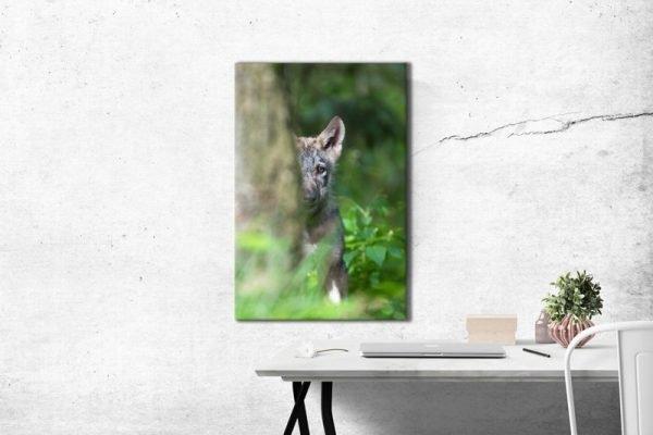 Kleiner Wolf hinter einem Baum Raumansicht