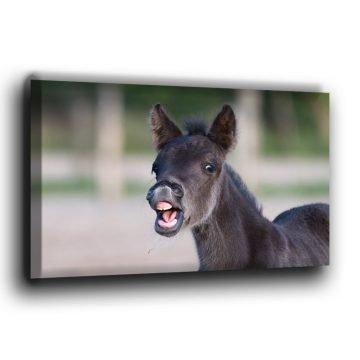 Das lachende Fohlen Leinwand
