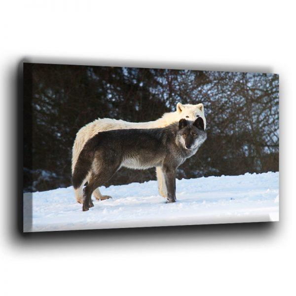 Polar- und Timberwolf auf einer Leinwand