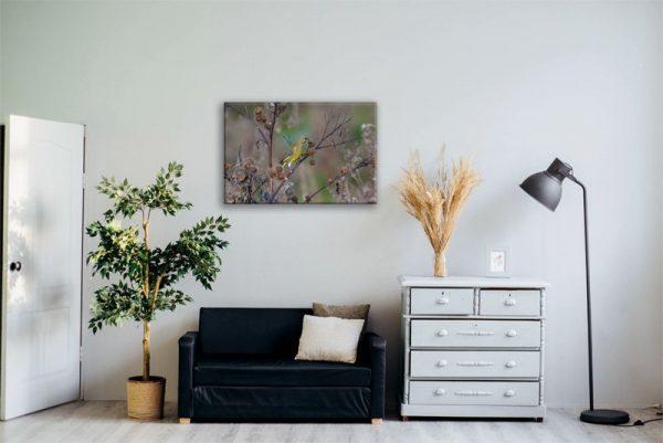Grünfinkleinwand im Raum