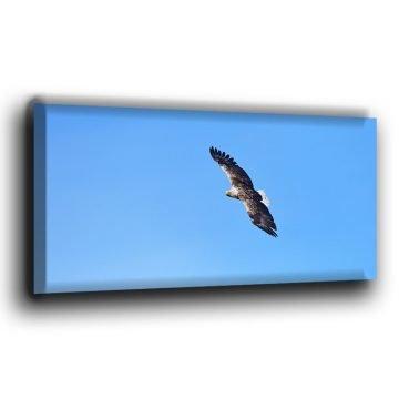 europäischer Seeadler im Flug Leinwand