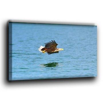 Europäischer Seeadler über Wasser Leinwand