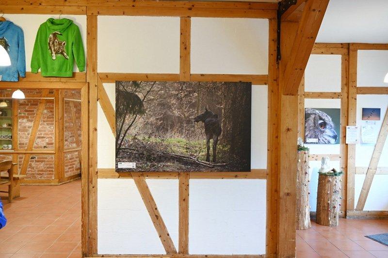 Ausstellung im Wildpark Schorfheide