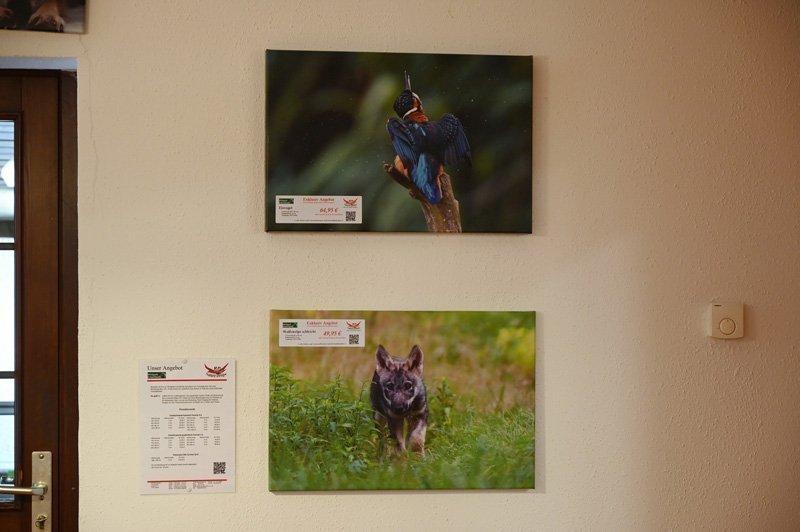 Eisvogel und Wolfswelpe in der Ausstellung im Wildpark Schorfheide
