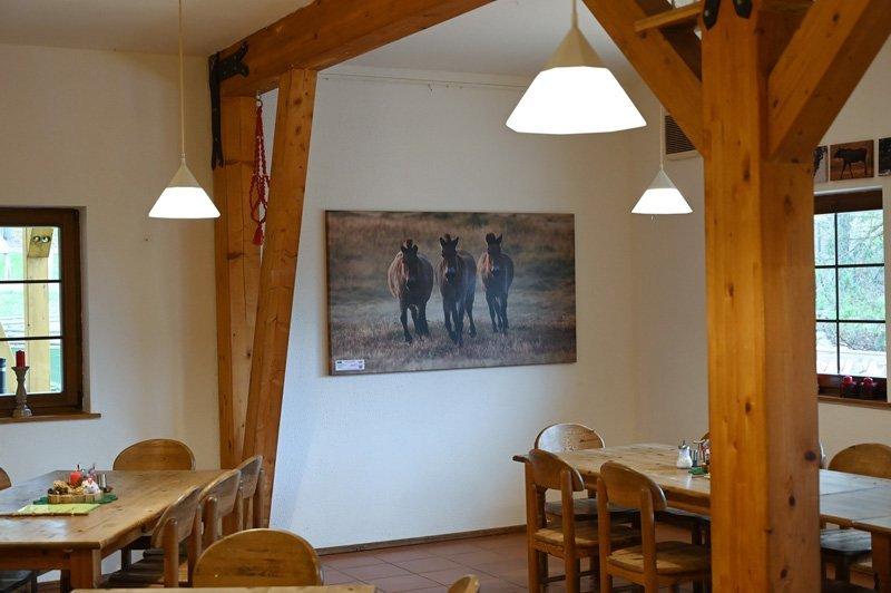 Przewalskipferde in der Ausstellung Wildpark Schorfheide