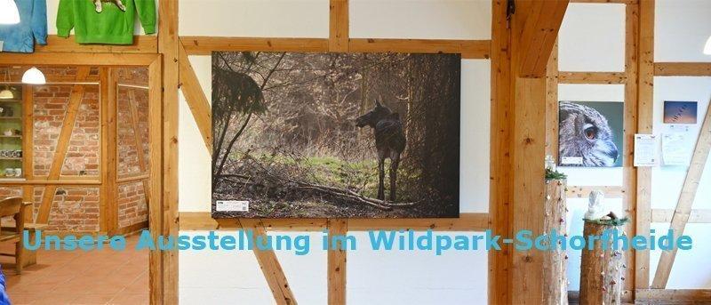 Ausstellung im Wildpark-Schorfheide