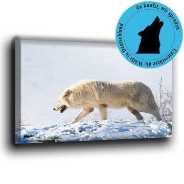 Polarwolf im Schnee Leinwand