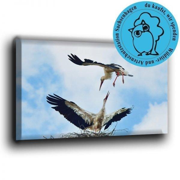 Storchenpaar Fotoleinwand