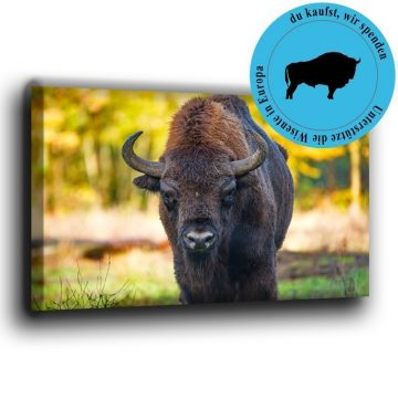 Wisent frontal Leinwand