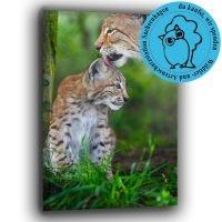 Luchs mit Kitten - hilf helfen! Du kaufst, wir spenden
